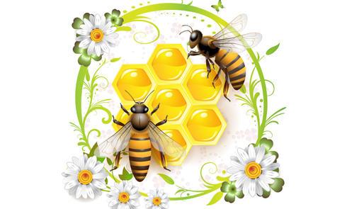 把蜂蜜价值发挥到最大化!Manuka Doctor蜂蜜海淘购买指南