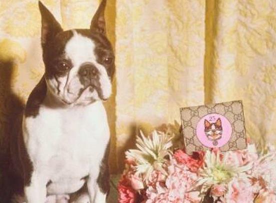 GUCCI推出中国新年系列 广告主角是波士顿梗犬