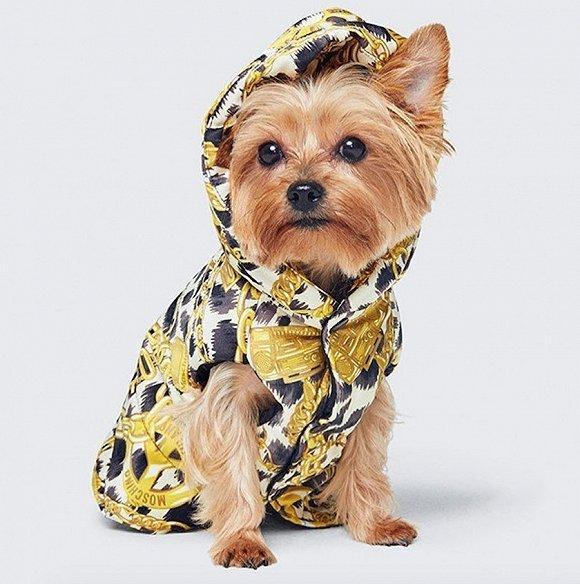 Moschino和H&M的最新合作系列推出宠物专属服装