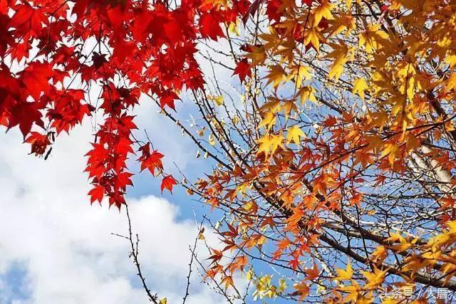 秋天刘雯穿上了枫叶色,换季参考