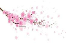 2019春季限制美妆盘货